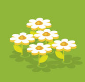 White chamomile. White geometry 3d chamomile on green back Royalty Free Stock Image