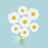 White chamomile bouquet Royalty Free Stock Images