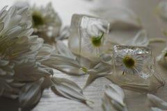 Flower inice Cube Stock Photos