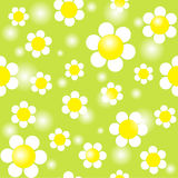 White chamomiles on a green background seamless Stock Images