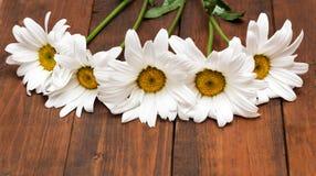 White chamomiles on wood background Stock Images