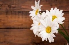 White chamomiles on wood background Royalty Free Stock Photo