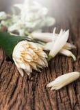 White Champaka flower   in babana leaf Stock Photos