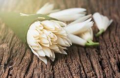 White Champaka flower. Stock Images