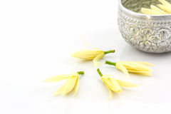 White Champaka flower. Stock Photos