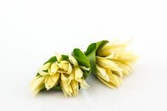 White Champaka flower on white backgorund. Royalty Free Stock Photography