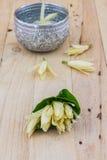 White Champaka flower. Royalty Free Stock Photo