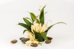 White Champaka Flowers. Royalty Free Stock Image