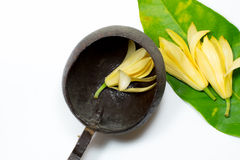 White champaka, green leaf and coconut shell bowl Stock Image
