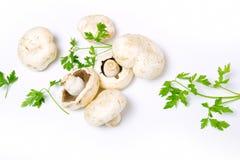 White champignon Royalty Free Stock Photos