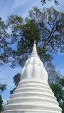 White Chedi under big tree and blue sky Stock Image