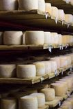 White cheese heads growing ripe on shelves of dairy food production farm. White cheese heads growing ripe on shelves of dairy food production house royalty free stock photography