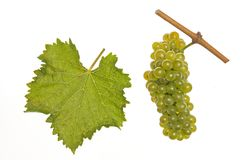 White chenin Royalty Free Stock Photography
