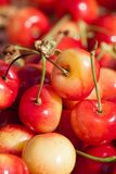 White cherries Royalty Free Stock Photos