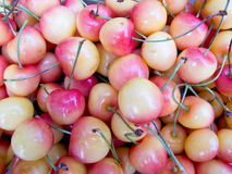 White Cherries royalty free stock images