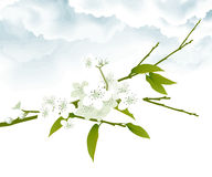 White cherry blossoms royalty free illustration