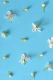 White cherry blossoms Stock Photo