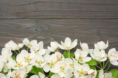 White cherry blossoms on dark wooden background. top view stock photo