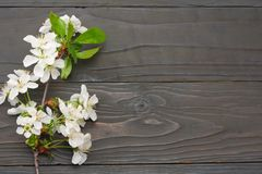 White cherry blossoms on dark wooden background. top view royalty free stock photos