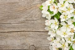White cherry blossoms on old wooden background. top view Royalty Free Stock Photo