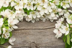 White cherry blossoms on old wooden background. top view Royalty Free Stock Photography