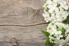 White cherry blossoms on old wooden background. top view Stock Image