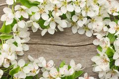 White cherry blossoms on old wooden background. top view Stock Photography