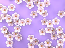 White Cherry Blossoms On Purple Background Royalty Free Stock Image