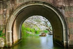 White cherry blossoms in spring. The small bridge in taizi bay park in hangzhou, zhejiang province, and the white cherry trees are beside the stream Stock Image