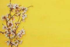 White cherry blossoms tree on wooden background Royalty Free Stock Photography