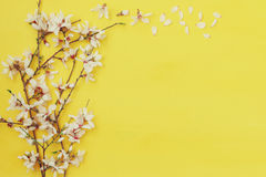 White cherry blossoms tree on wooden background Royalty Free Stock Photos