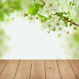 White Cherry Tree Flowers, Green Leaves. And Beige Empty Wooden Table on Spring Health Background with Copy space Royalty Free Stock Photography