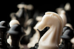 White chess knight Royalty Free Stock Image