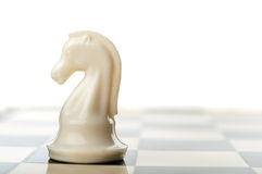 White chess knight Stock Images