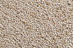 White chia seeds background Stock Images