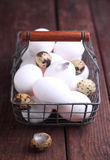 White chicken and brown quail eggs Stock Image