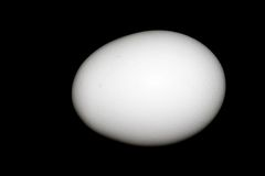 White Chicken Egg. On Black Background Stock Photography