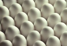 White Chicken Eggs Royalty Free Stock Photo