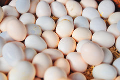 White chicken eggs in basket Royalty Free Stock Image