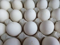 White chicken eggs in a cardboard tray Stock Images