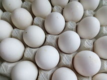 White chicken eggs in a cardboard tray Royalty Free Stock Photo