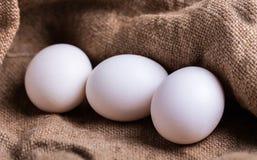 White chicken eggs closeup Stock Photo
