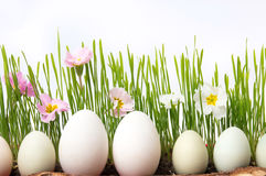 White chicken eggs and flowers in wheat Royalty Free Stock Photo