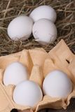 White chicken eggs in a tray and a hay closeup. Stock Image