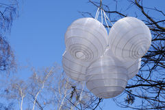 White Chinese paper lanterns hanging on a tree branch Stock Photos