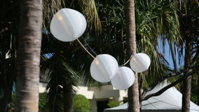 White Chinese Paper Lanterns. White chinese lantern hanging on a tree for an outdoor wedding reception