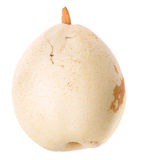 White chinese pear Stock Photo
