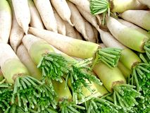 White chinese radish Royalty Free Stock Image
