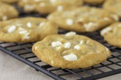 White Chocolate and Macadamia Cookies Royalty Free Stock Photography