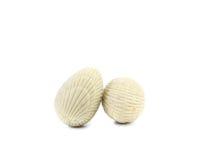 White chocolate seashell. Royalty Free Stock Images